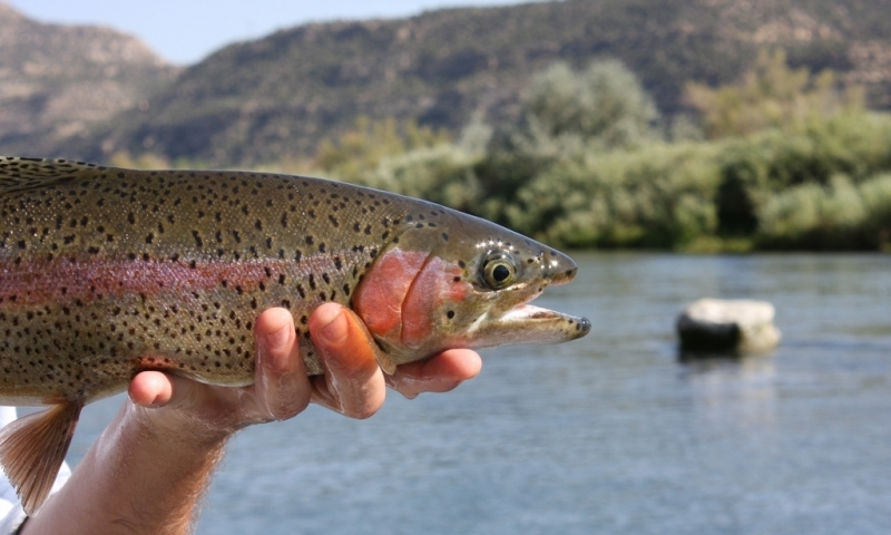 San juan river utah fly fishing camping boating alltrips for Fly fishing salt lake city