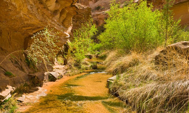 Negro Canyon Creek near Moab