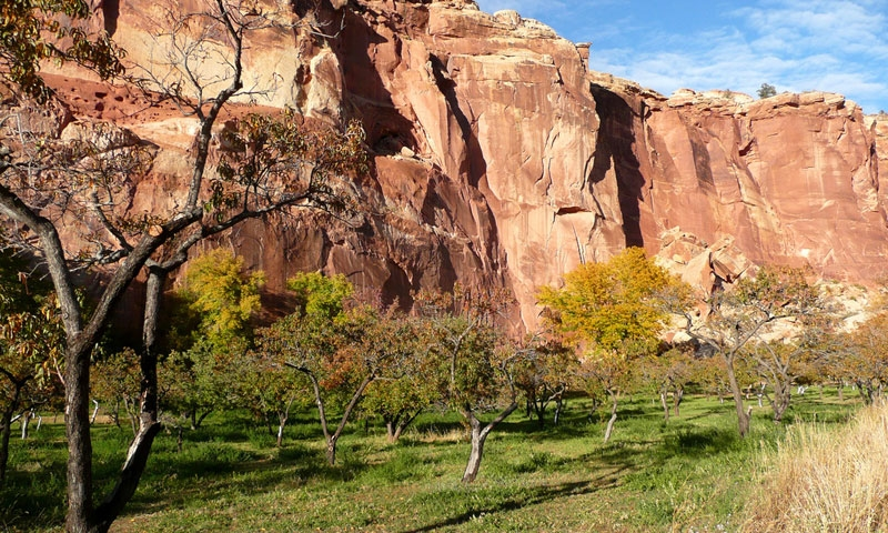 Fruita Orchard in Capitol Reef National Park